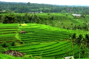 Bali Landscape Tour
